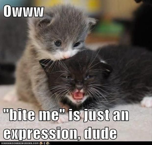 So cute in case you needed a smile – cute baby animals funny sayings