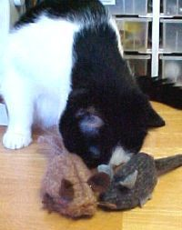 Sew a Cat Mouse Toy with Catnip Refill Opening