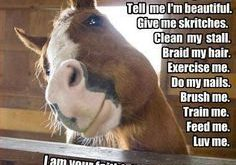 funny horse pictures with captions | Funny Horse Captions