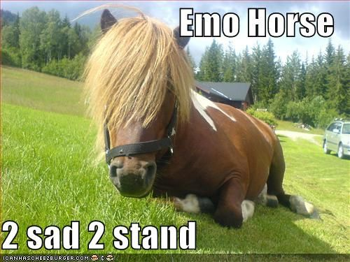 Funny Horse Pictures with Captions | funny pictures of horses,Funny horse photos and funni...