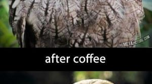 funny caption owl before coffee after coffee