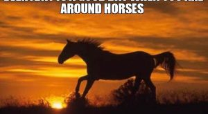 funny horse pics with captions – Google Search