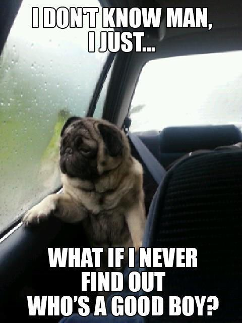 Nothing satisfies like a hilarious dog meme. Take a cute pic, add a funny…