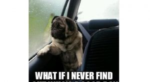 25 funny dog memes that feature a picture of a pooch and a funny…