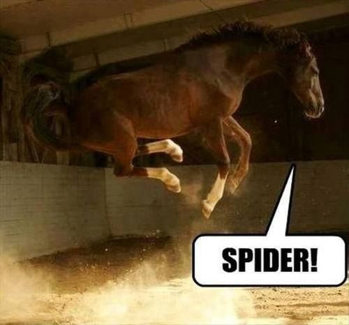 Funny scared horse –