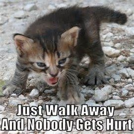 """#catsmemes explore Pinterest""""> #catsmemes, #catsgifmemes, funny animal pictures, ..."""