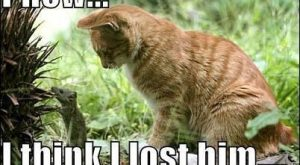 funny caption pictures mouse with cat behind it phew i think i lost him