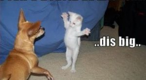funny+pictures+with+captions   Funny pictures of animals with funny captions pictures 1