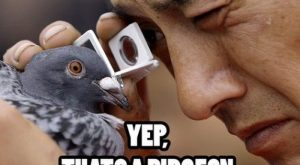 funny pictures with captions | … caption are just priceless a compilation of hilario...