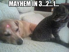 Funny Cat Pictures with Captions Cheeseburger | funny caption picture mayhem in 3 2…