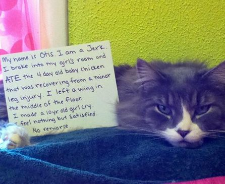 15 Funny Pictures Of Public Cat Shaming