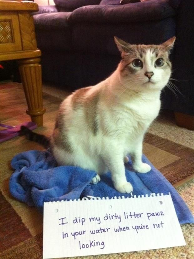 The Best Of Cat Shaming