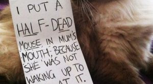 Cat-Shaming At Its Best Except that cats can never feel remorse. Heartless beasts