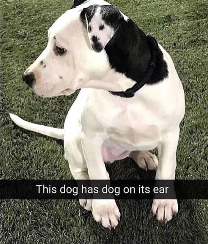 50+ Funny Animal Pics That Will Bring Piquancy to Your Week