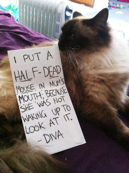 Cat-Shaming At ItsBest Except that cats can never feel remorse. Heartless beasts