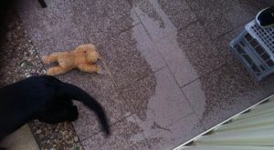 funny caption dog lying in rain gets up leaves dry outline