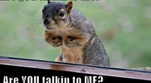 "#humor explore Pinterest""> #humor #squirrel explore Pinterest""> #squirrel #fun..."