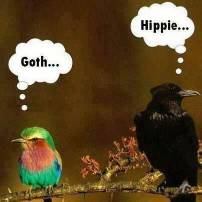 even birds judge each other. What has this world come to?