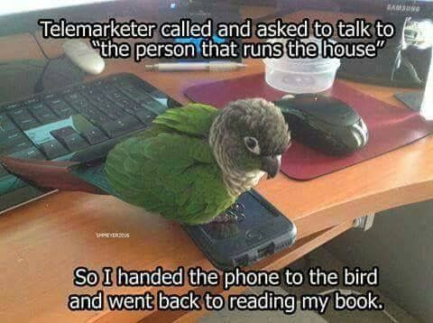 Then the bird passed the phone on to the dog, who ate it