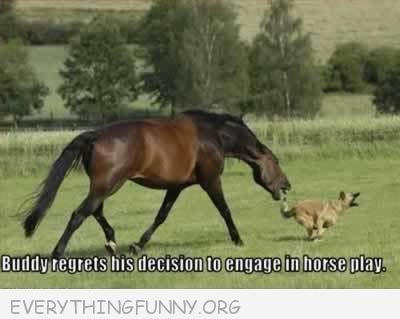 funny caption buddy regrets his decision to engage in horse play