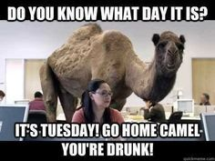its tuesday drunk camel funny quotes funny quotes days of the week humor hump…