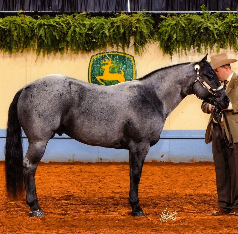 You can't give up shame without giving up pride. – Blue Fox Hancock AQHA…
