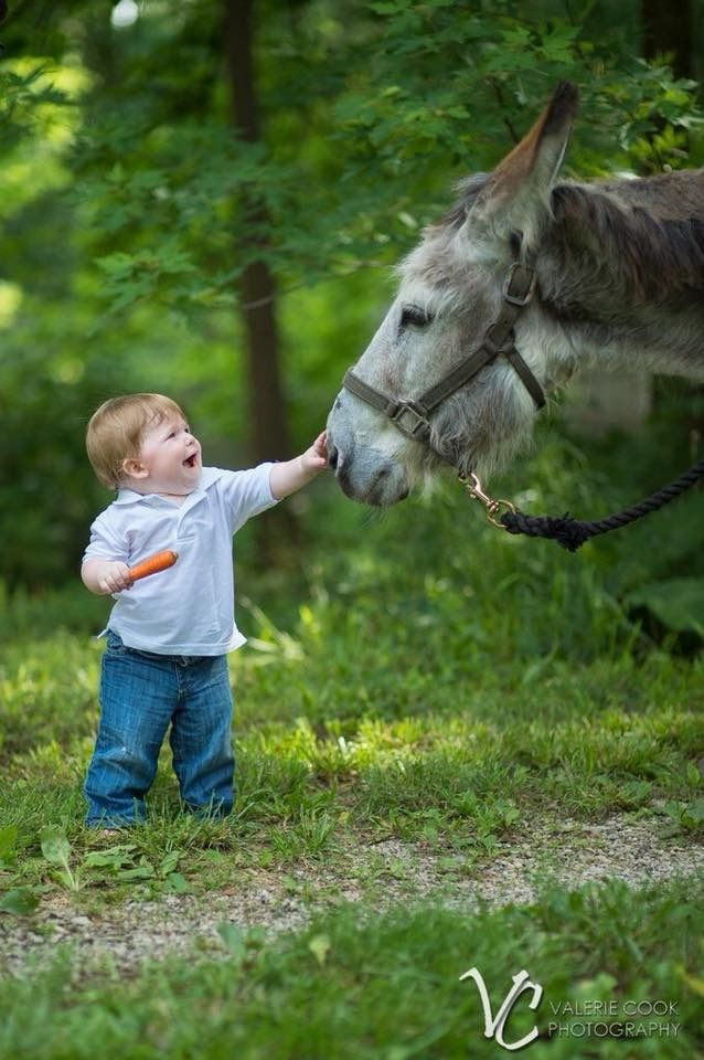 Casey Leavelle ~ Only Donkeys – My baby is turning 1! I had to…