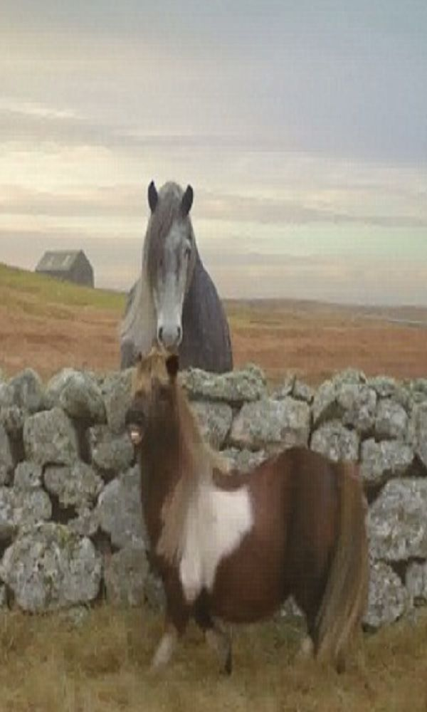 As Soon As The Farmer Leaves, The Pony Starts Dancing! Hilarious! (VIDEO) #pony explore…...