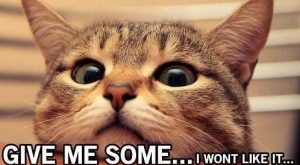 TOP 42 Funny Cats and Kittens Pictures | Funny Animals, Funny Cat |