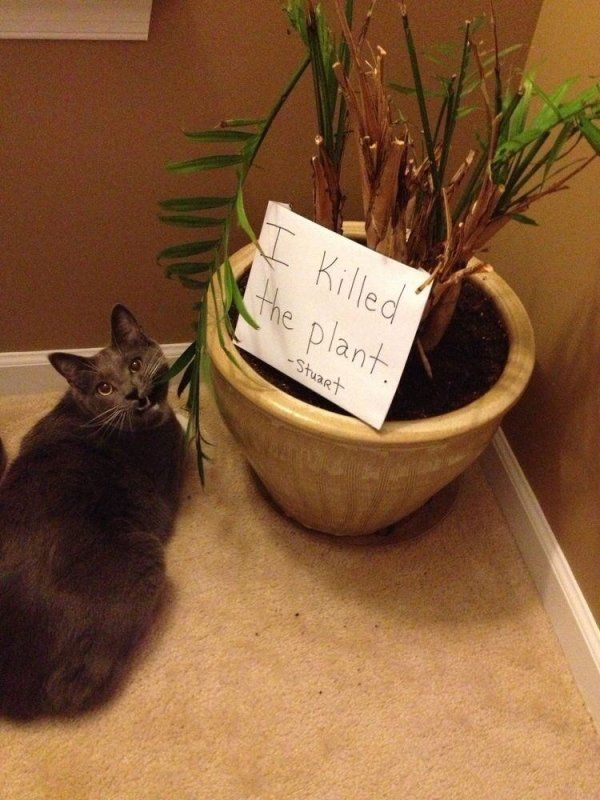 34 Examples Of Cat shaming From The Hall Of Shame | CutesyPooh