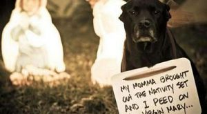 50 Best Dog Shaming Pictures