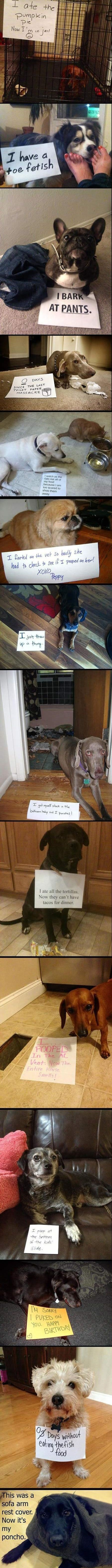 Funny pictures of the day (48)