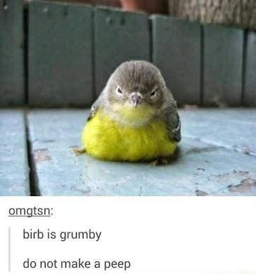 BIRB, BIRB, BIRB, BIRB IS THE WORD – 50 BIRD MEMES TO MAKE YOU…