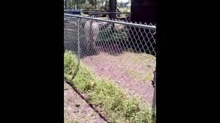 """#Dog search Pinterest""""> #Dog Gets Owned By Donkey – #funny search Pinterest..."""