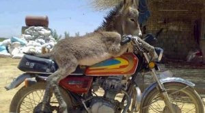 Funny Donkey | donkey funny photo which is very hilarious and this pakistani funny…