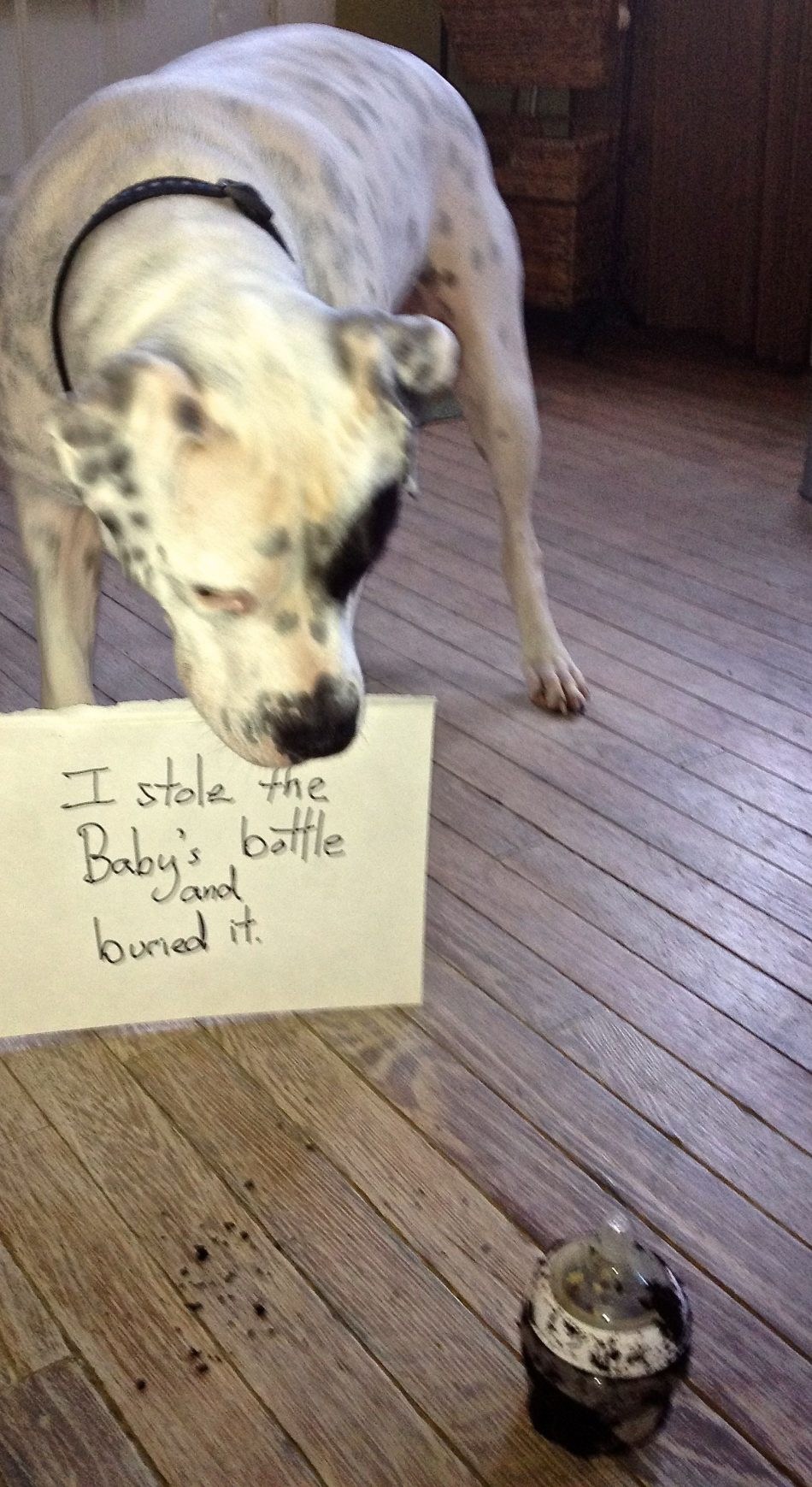 I stole and buried the baby's bottle