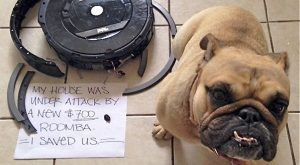 When bad dogs get sentenced to public embarrassment as their punishment — 14 hilario...