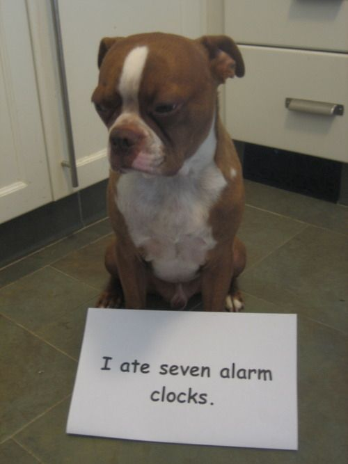 We don't like them either but we don't eat them ;) #enddogshaming search Pinte...