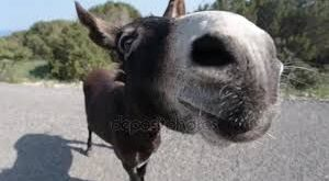 Image result for royalty images of donkeys with funny faces