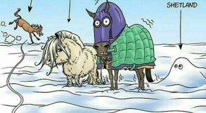 * * HORSE HUMOR >* * Rather rare. At least, I haven't seen many.…