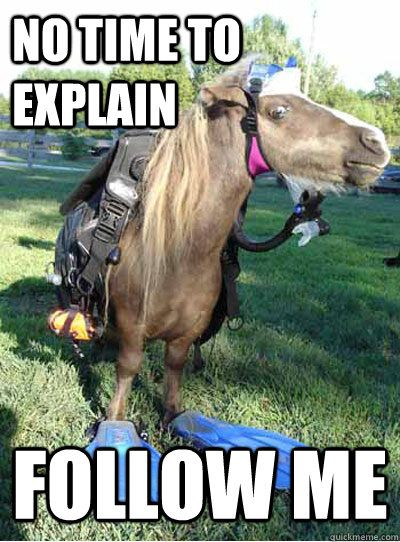Horse memes about Spring – Google Search