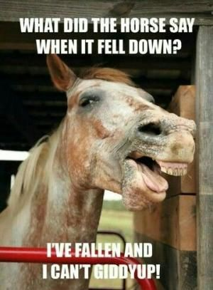 What did the horse say when it fell down? I've fallen and I can't…