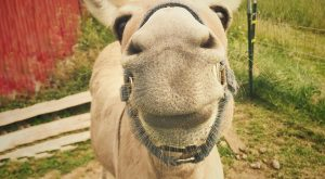 "Who can resist such a sweet smile? #donkeys explore Pinterest""> #donkeys #farmanimal..."