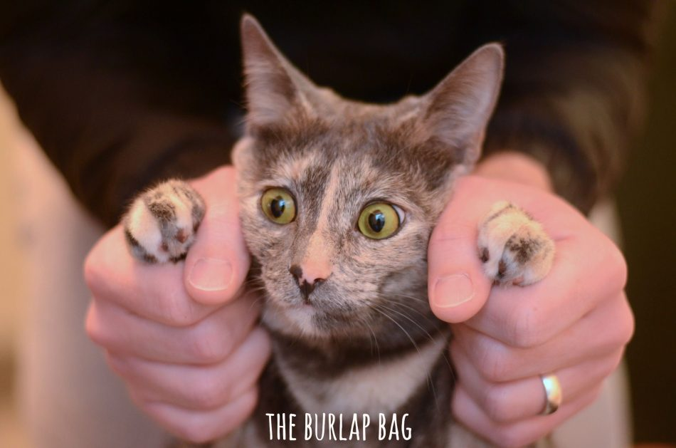 a cat caption contest! win a week of free advertising on our blog!