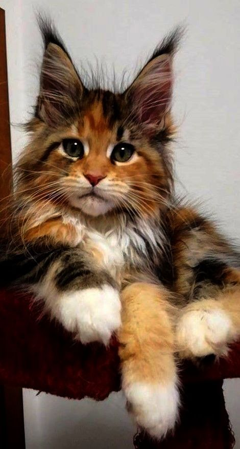 Cute Cats Hd Wallpapers Free Download Cute Cats Sounds
