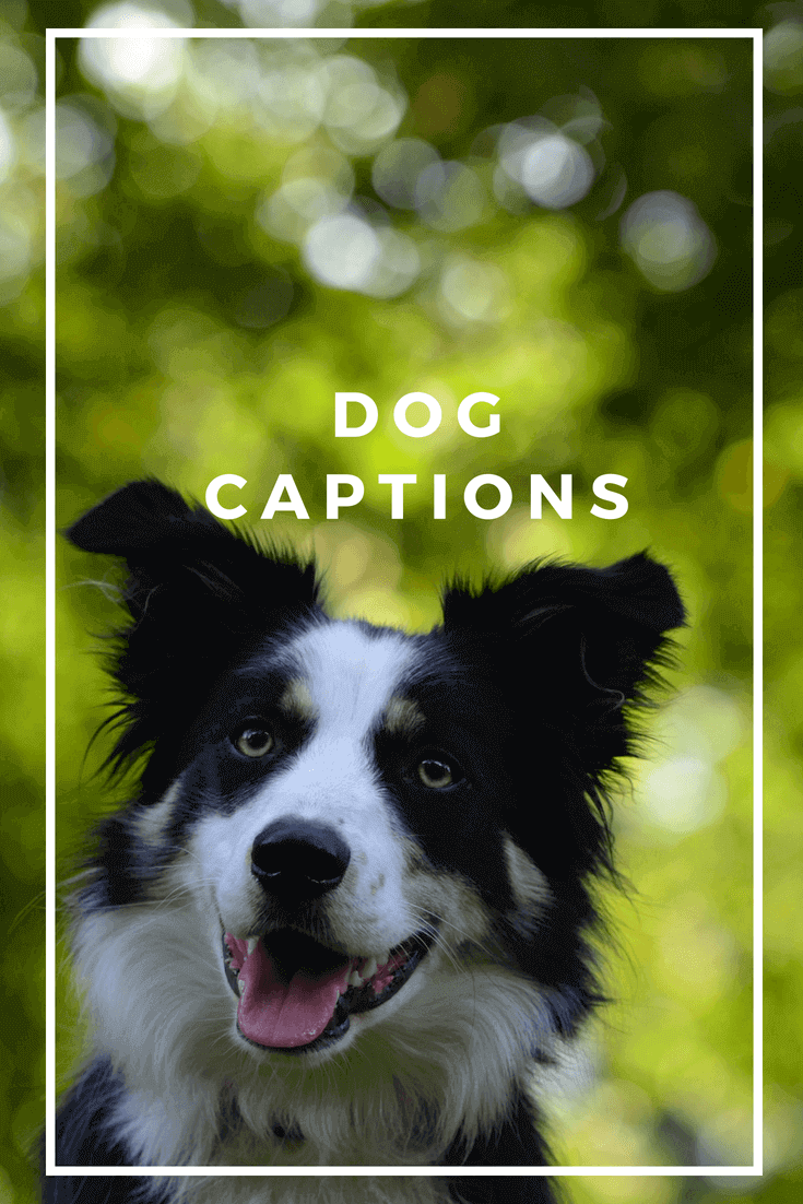 Here, I've collected some of the most beautifuldogcaptions for your Instagram pi...