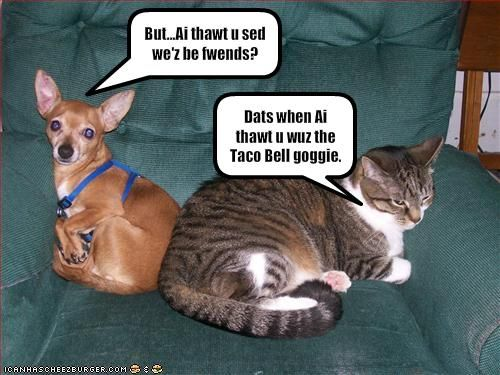 Funny Dog Photos with Humorous Captions, Leave a reply to Batman Funny Dog Captions.…