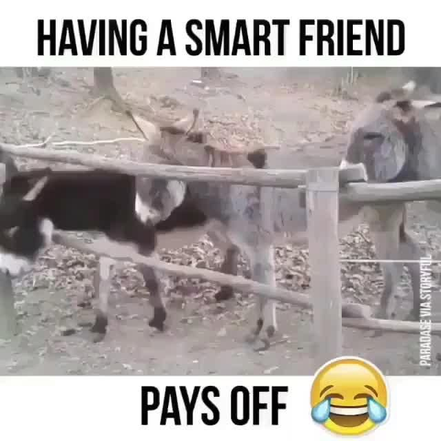 OMG YOU MUST SEE THIS DONKEY