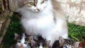 "What a lovely family picture #cats explore Pinterest""> #cats"
