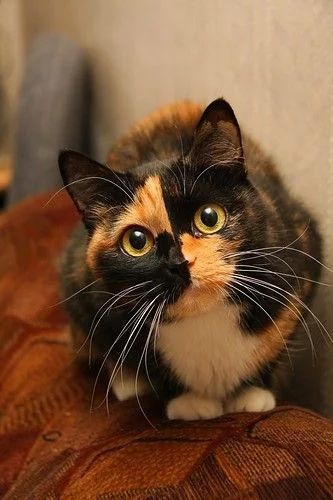 Click the Photo For More Adorable and Cute Cat Videos and Photos #cutecats explore…